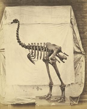 """Skeletons"" reprinted inaudio"