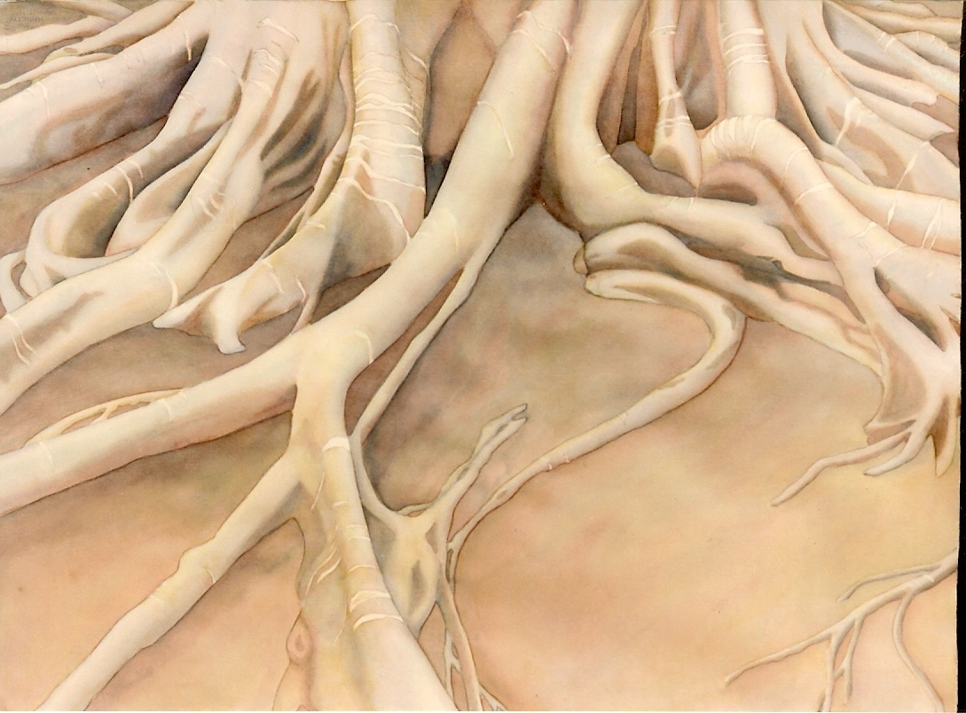 Art: watercolor of tree roots